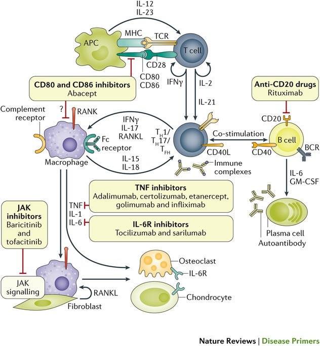 Figura 1. Smolen et al.6 Mecanismo de acción de los diferentes fármacos antireumáticos