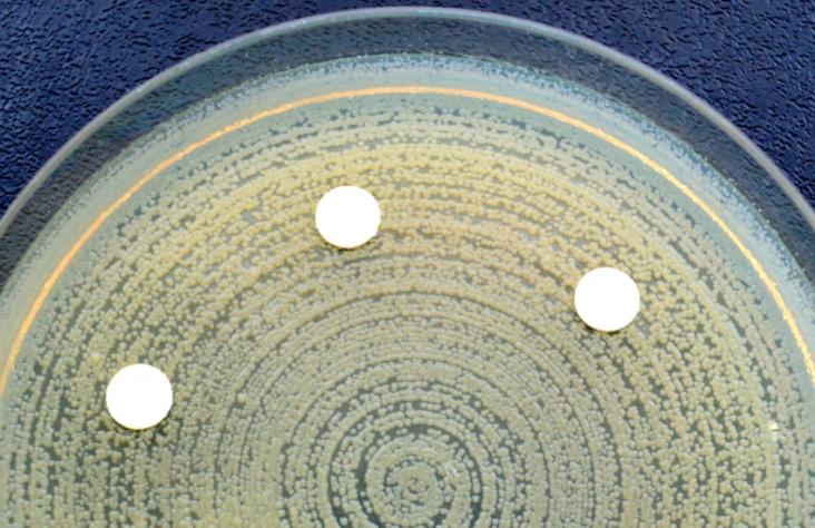 Resistencia antibióticos